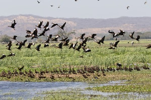 Black-bellied Whistling Ducks, Madrigal Estuary in Costa Rica, photo by Debbie Thompson