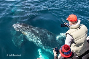 Humpback Whale © Jodi Frediani